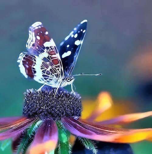 39o της πεταλούδας...