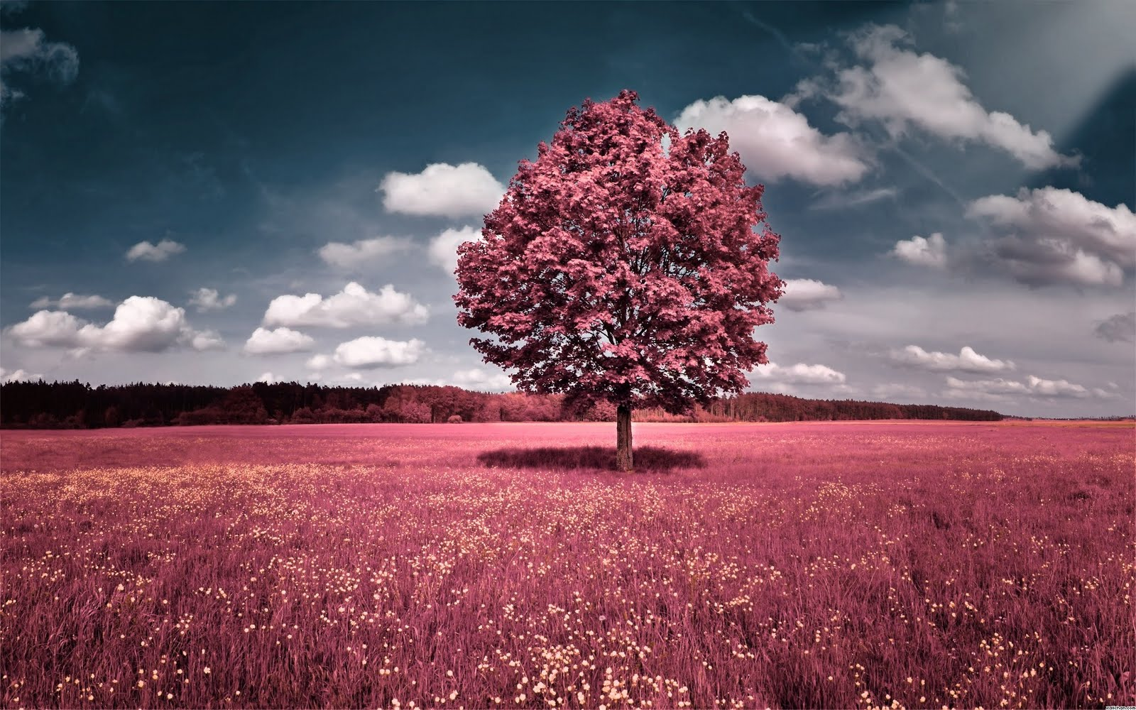 http://2.bp.blogspot.com/-t5xuf4_4YiM/Tj5IcztaI1I/AAAAAAAACc8/kBwplqY-sms/s1600/1305895965-clouds-trees-sky-flowers-pink-grass-fields-hills-wallpaper.jpg