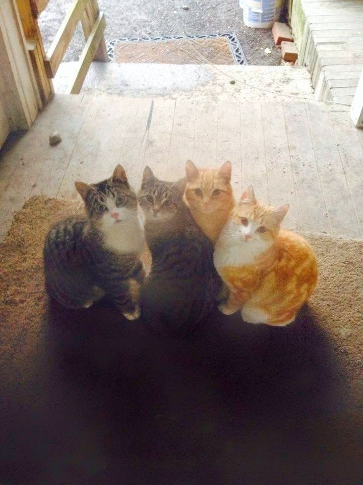Funny cats - part 99 (40 pics + 10 gifs), cat pictures, four cat siblings
