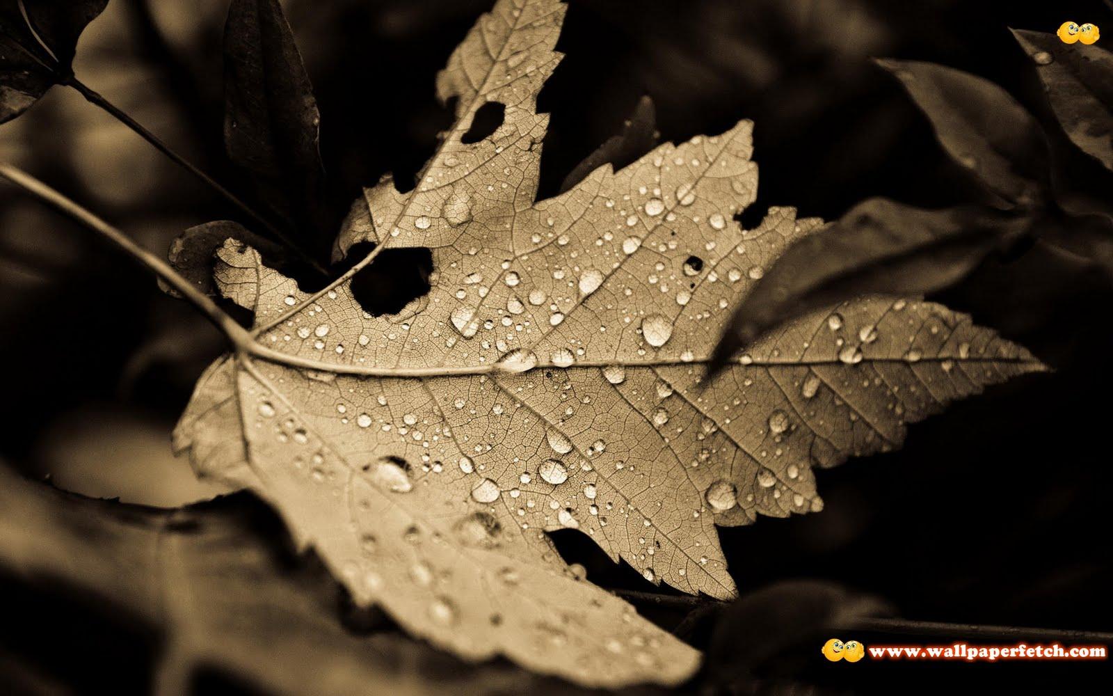 http://2.bp.blogspot.com/-t6OGopr-aNQ/TrxDjRB-bVI/AAAAAAAAJgY/l2izoboHYb0/s1600/SuperPack_Beautiful_Nature_HD_Wallpapers_Part__80.47.jpg