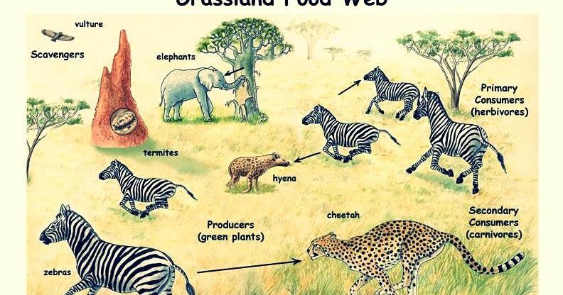 Lebih Dekat Dengan Ekosistem Darat