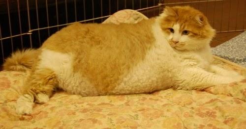 Billy Info Kucing Garfield Yang Sebenar Di Dunia Nyata 7