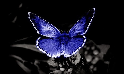 Top Butterfly Wallpaper For Android Phone