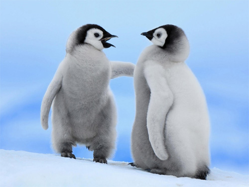 Android Phones Wallpapers Wallpaper Penguin