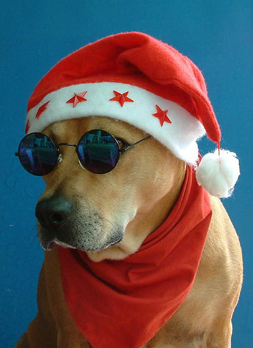 Very funny Christmas dog.