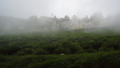 Darjeeling tea estate, Darjeeling, Darjeeling India