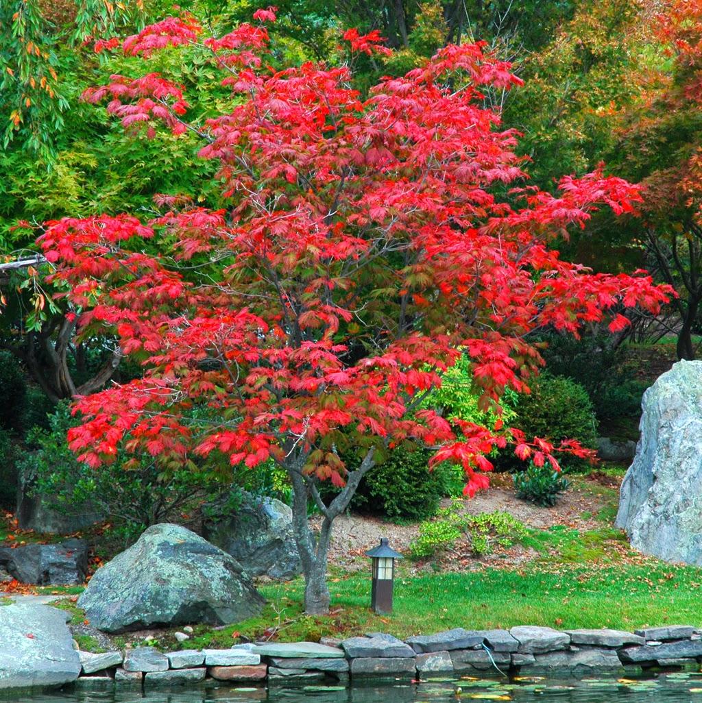 Arte y jardiner a arboles para jardines peque os for Jardines pequenos horizontales