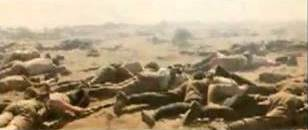 the battles of the crimean war history essay The crimean war is commonly known as the charge of the light brigade, during which britain made a wrong attack the war was fought between britain and france, which were the allied nations against russia, which was a common enemy.