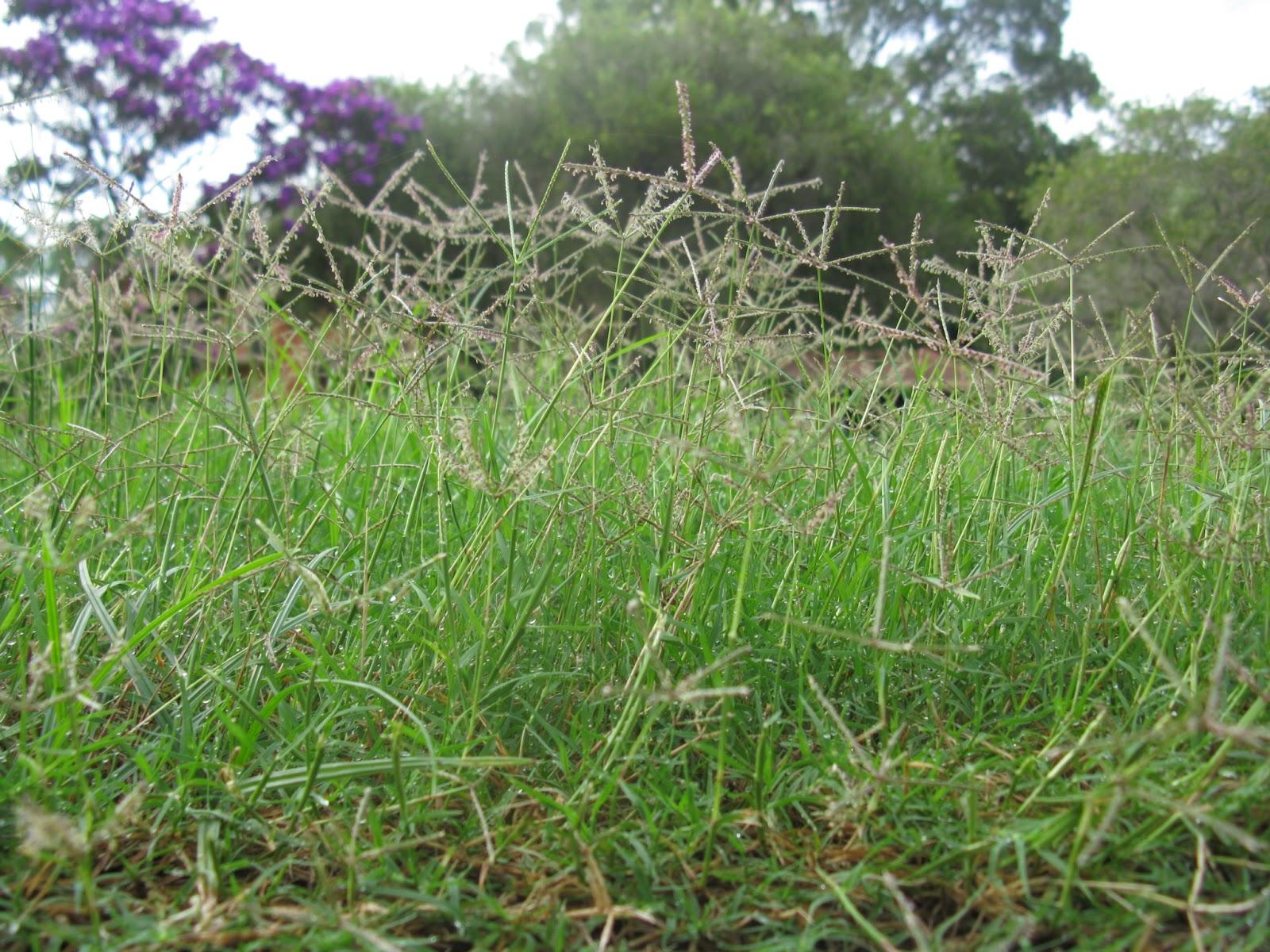 How to Kill Bermuda Grass