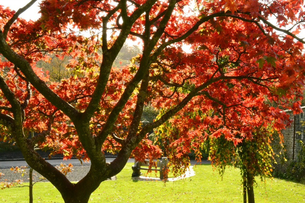pollok country park house glasgow scotland red trees leaves garden autumn