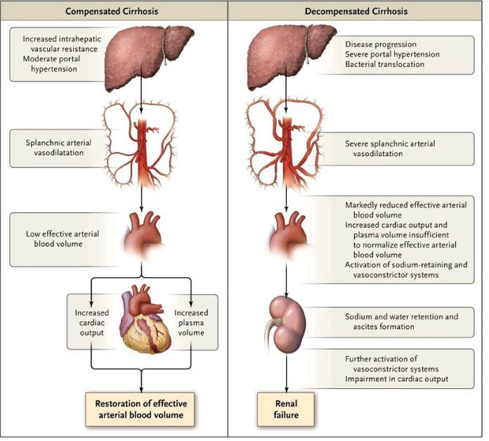 location of gallbladder yellow skin