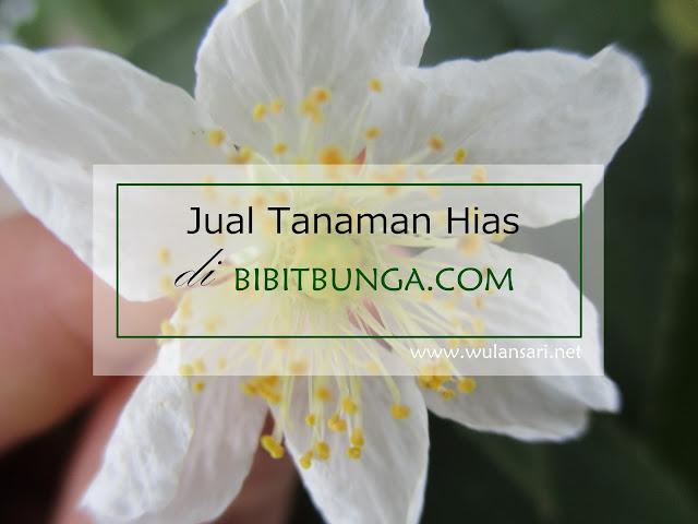 Jual Tanaman Hias di BibitBunga.COM