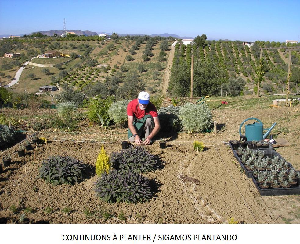 Plantas arom ticas jard n de nudos - Plantas aromaticas jardin ...