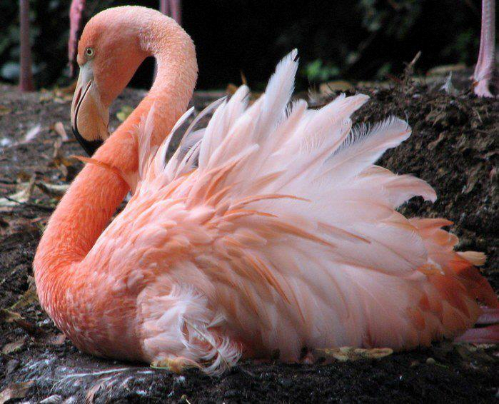 "pink flamingo essay example Free sample marketing essay on plastic pink flamingo in ""the plastic pink flamingo: a natural history"" author jennifer price explains that the lifeless bird symbolizes."