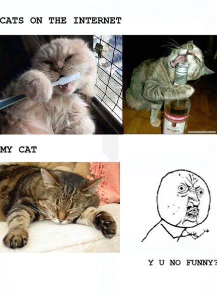Cats On The Internet vs My Cat - Y U No Funny