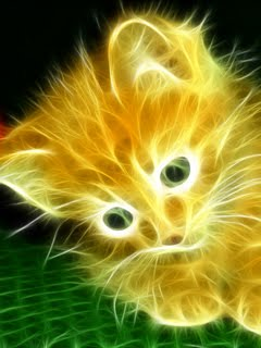 Animated 240x320 Beautiful Cat Cell Phone Wallpaper Wallpapers
