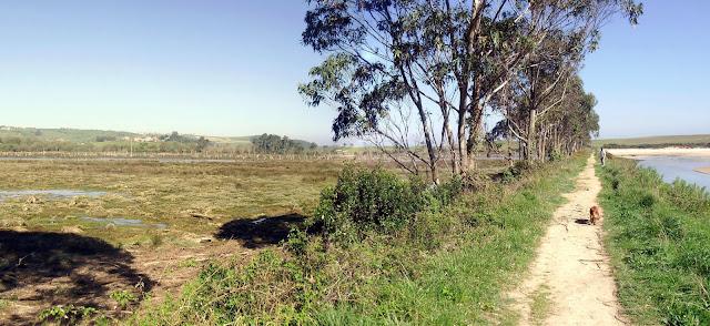 Marismas del Parque Natural de Oyambre