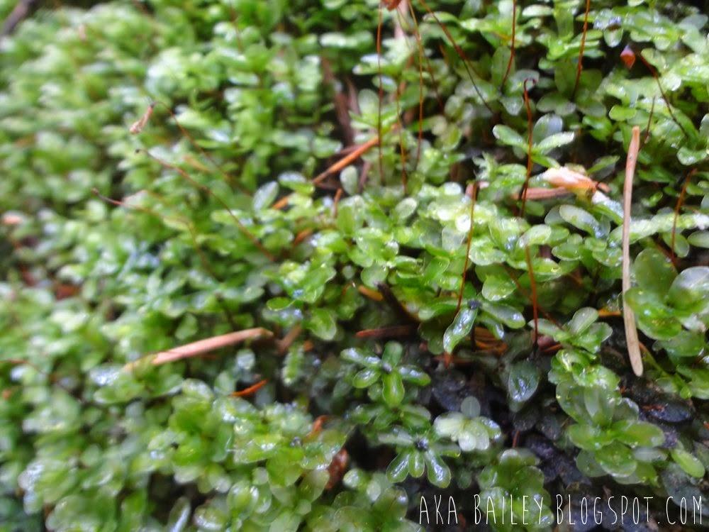 Tiny clovers