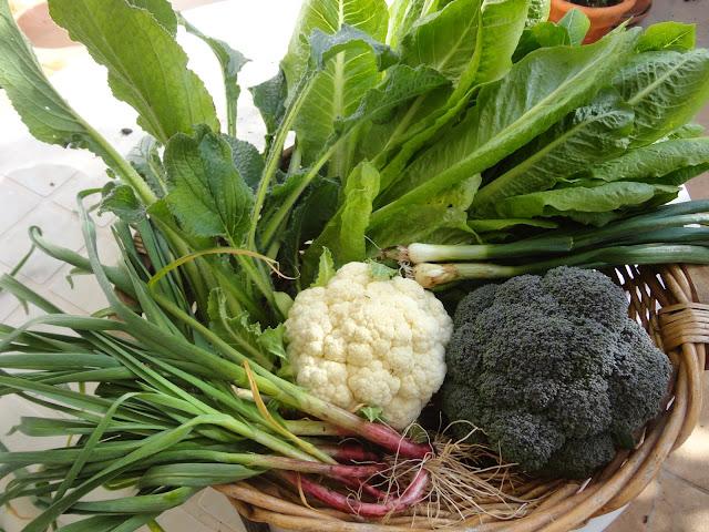 Ajetes-brócoli-lechuga-coliflor-cebolletas-borrajas