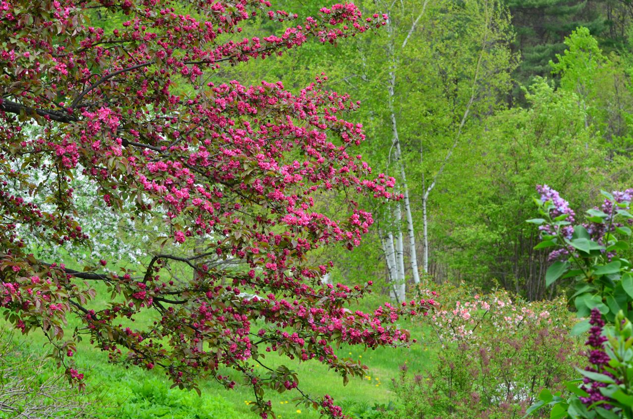Flower Hill Farm The Crabapple Orchard