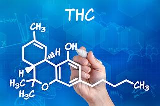 Hampa och THC mot cancer