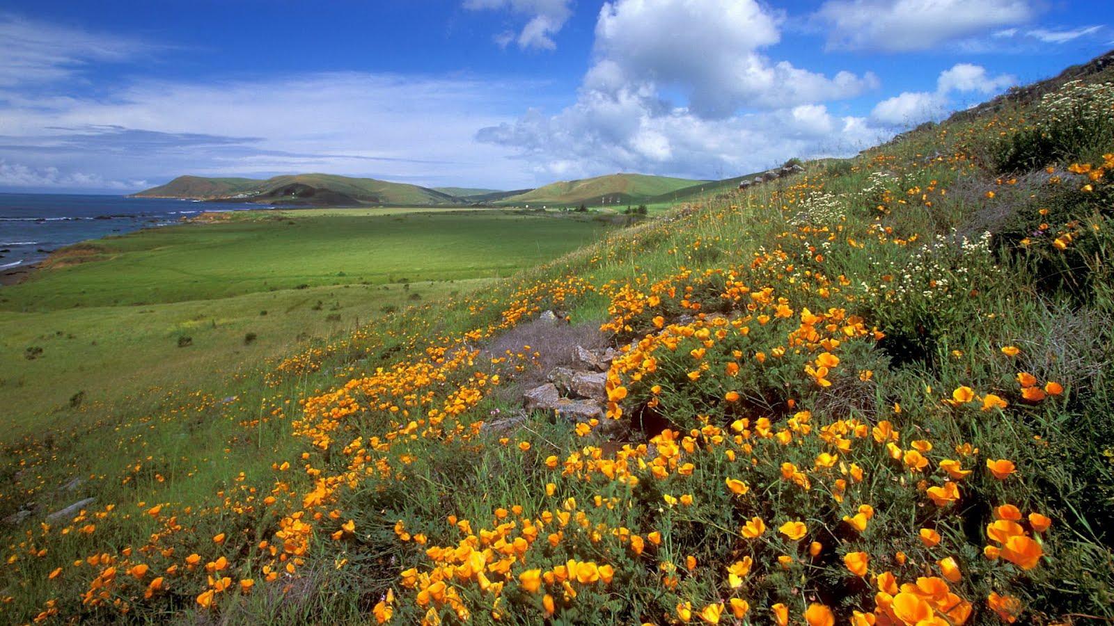 http://2.bp.blogspot.com/-tB5urTcjJC8/T560HiXDmDI/AAAAAAAAAEg/VVSE-0Opnng/s1600/HD-Wallpapers_Free_Nature_Flowers%2Bin%2Bthe%2Bmeadows_-762504.jpg