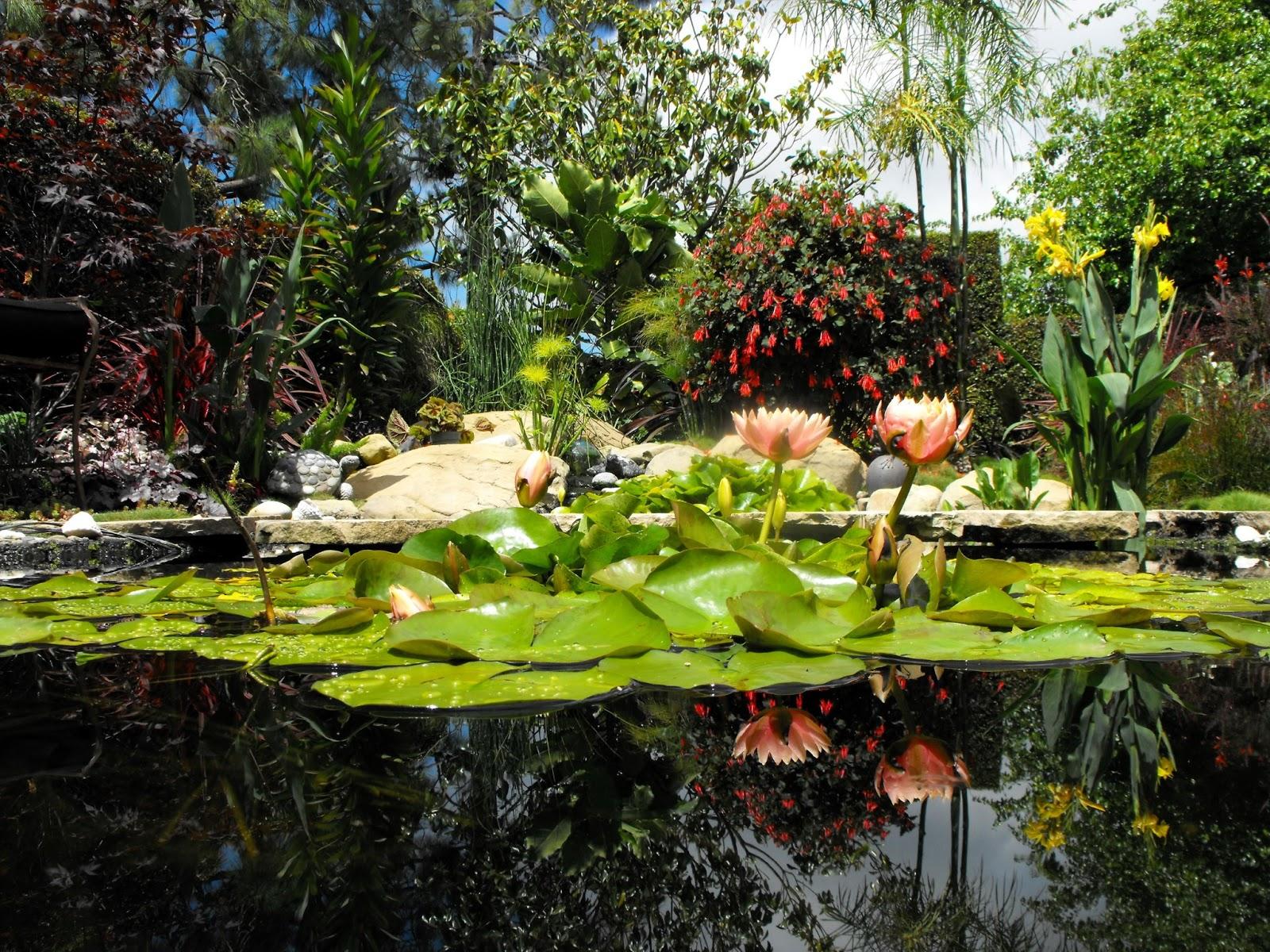 Arte y jardiner a jardin acu tico for Jardines y estanques