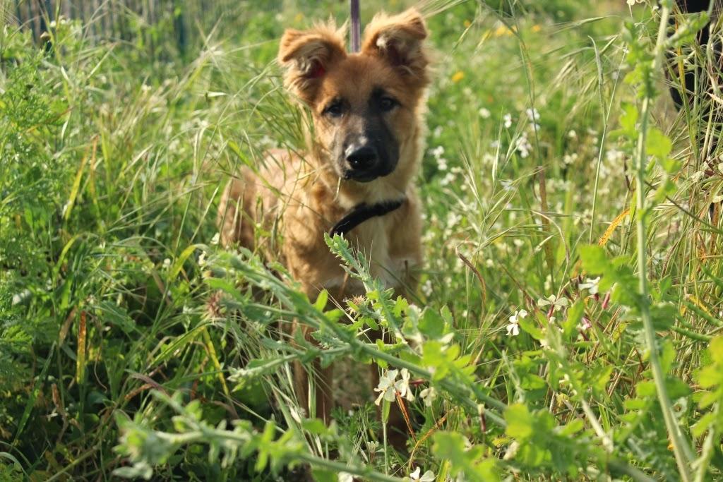 cane-primavera