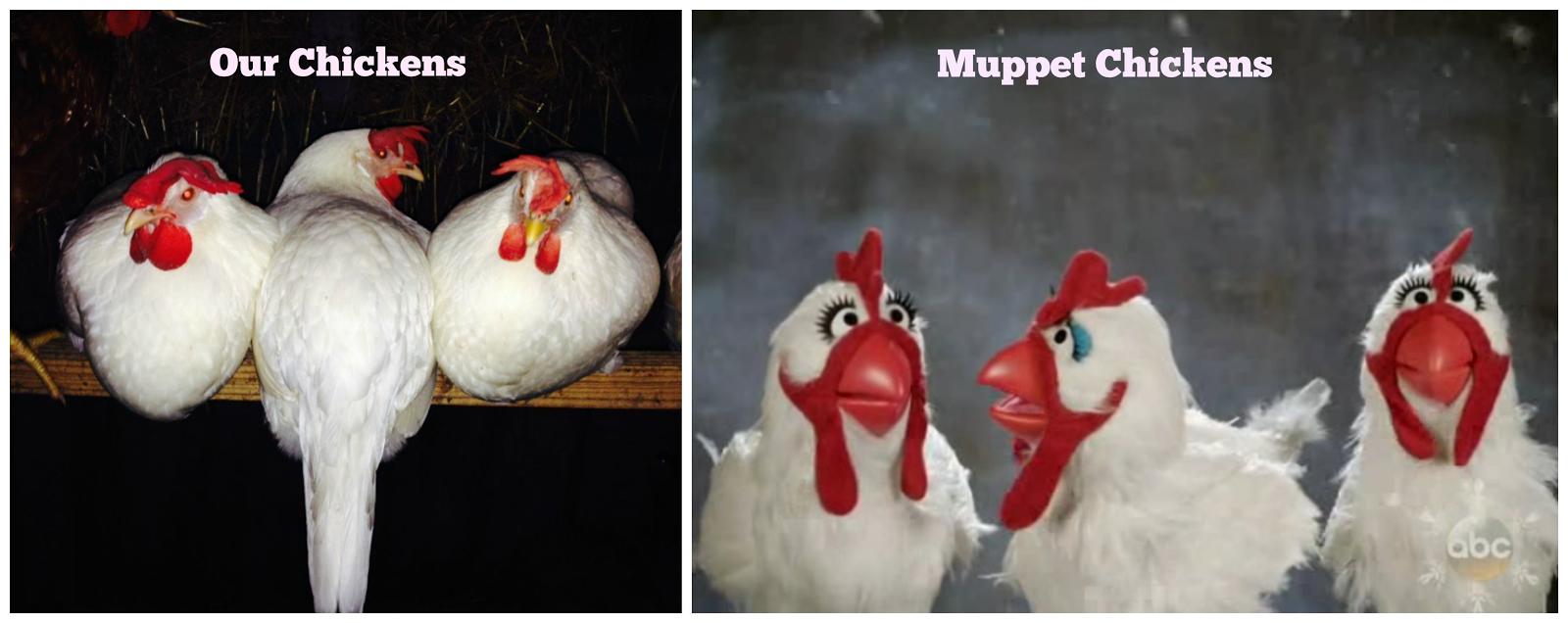 My Three Chicks