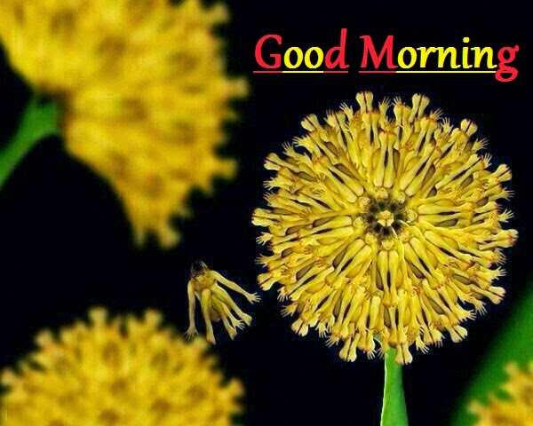 2014 stylish good morning wishes cards free download - Good morning full hd ...