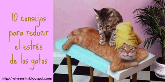 10-consejos-reducir-estres-gatos