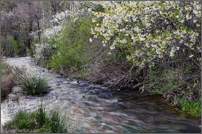 El Río Blanco en Royuela