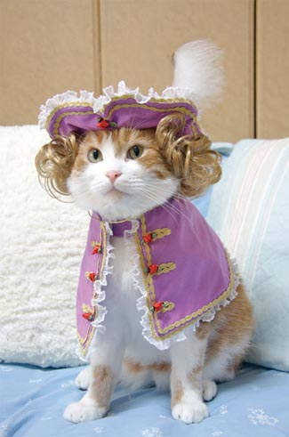 Cat s in Costumes  WHY YES Cat Costume For Cats