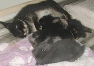 króliczki miniaturki - Niuniek ze swoimi Dziećmi