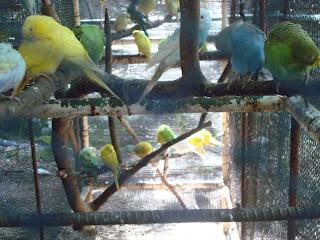 cute birds in Zoobic Safari