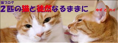 猫ブログ 二匹の猫と徒然なるままに ゆずとカイ