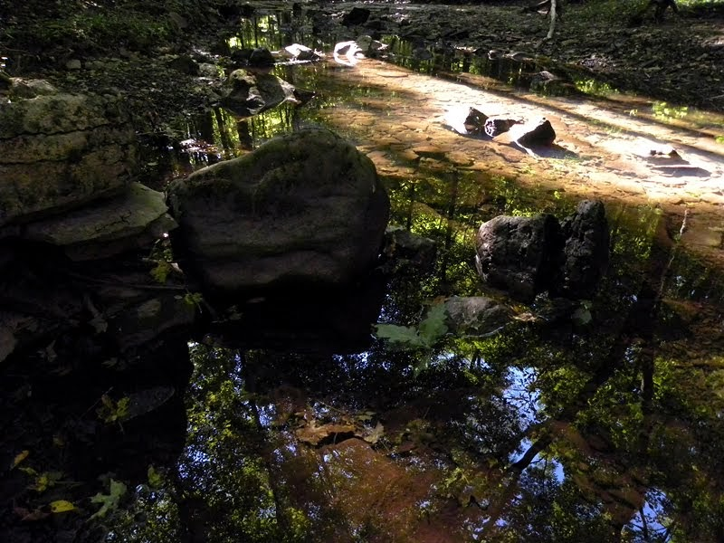 Sweetapple trails: reflecting on fall