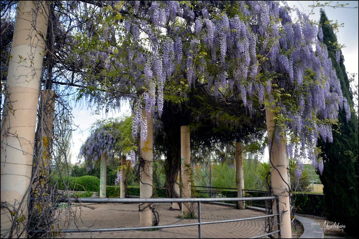 El jardín olvidado de Federico García Lorca. Abuelohara