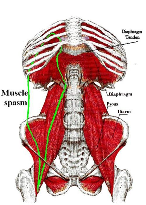 Muscle Strengthening: Diaphragm Muscle Strengthening Exercises