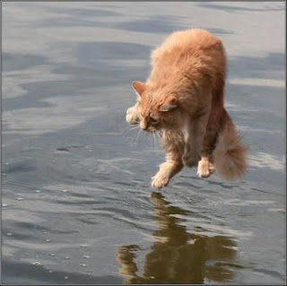 funny cat in water dancing