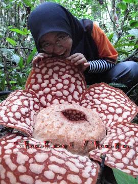 Rafflesia tak boleh dimakan