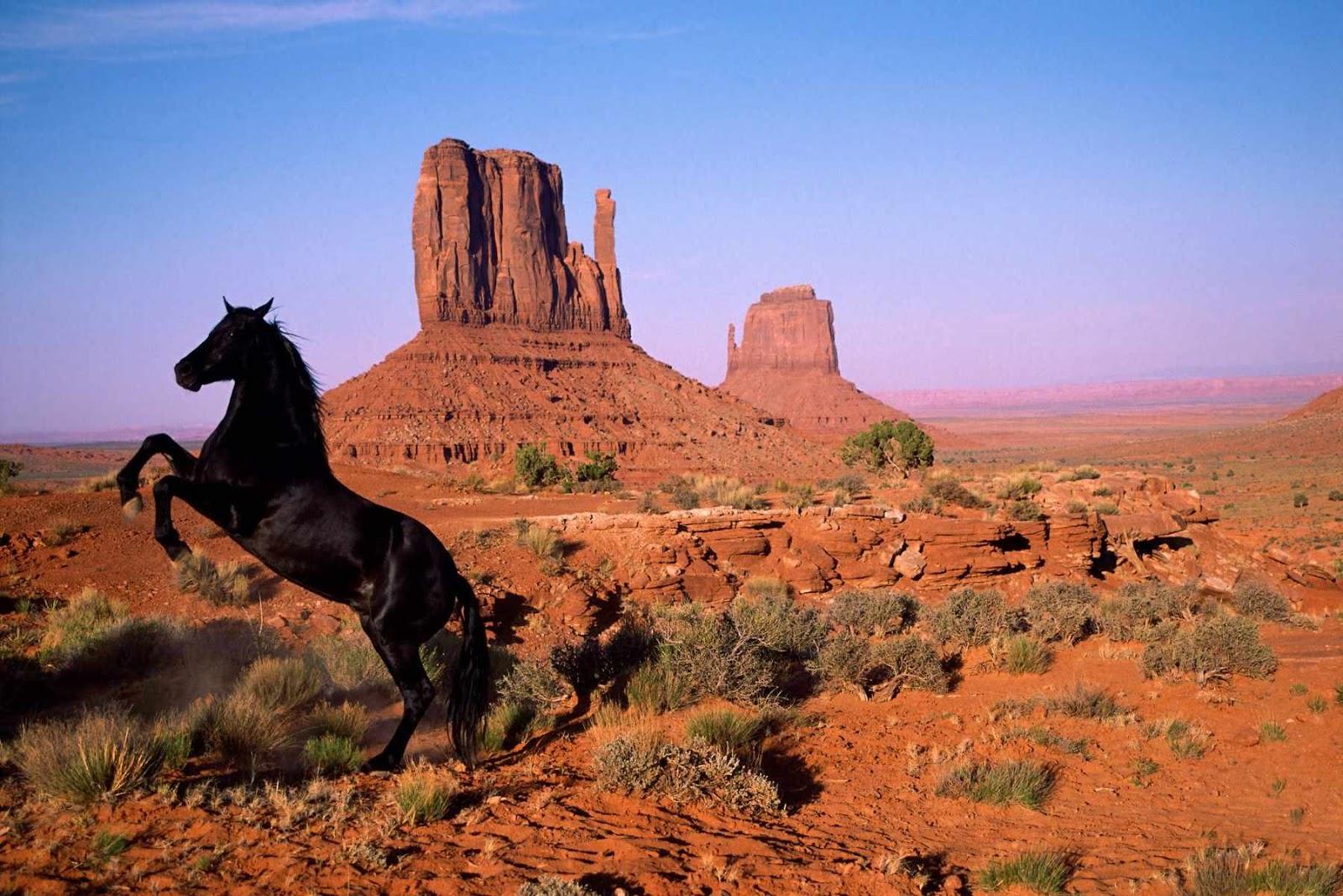 http://2.bp.blogspot.com/-tDkDzE1Qg98/T3ATd9DiGJI/AAAAAAAALAc/1LzpeMUV8Cc/s1600/caballos,zoomgraf.blogspot+%2815%29.jpg