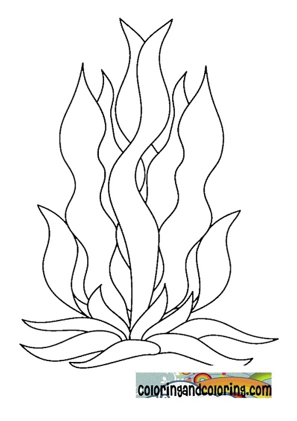 seaweed cartoon coloring pages - photo#1