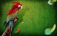 Splash of Parrot