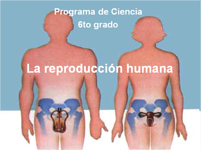 El sistema reproductor humano