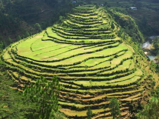 Uttarakhand land of god uttarakhand for Define terrace farming