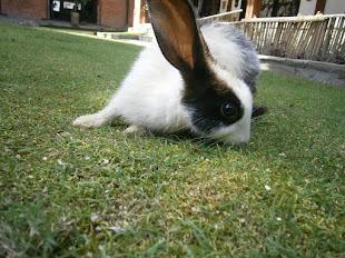 заяц-скептик