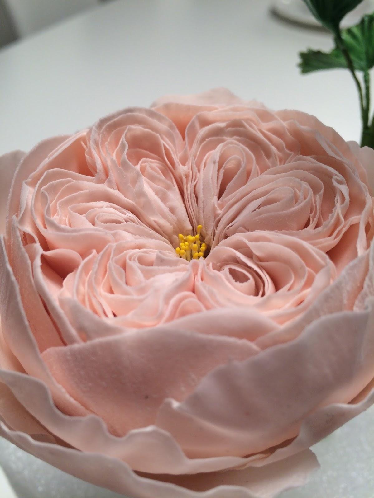 Spazio cri fiordaliso rosa inglese e geranio di pasta di for Rosa inglese
