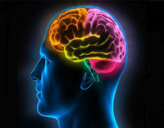 edad cerebral, cerebro humano, inteligencia, test