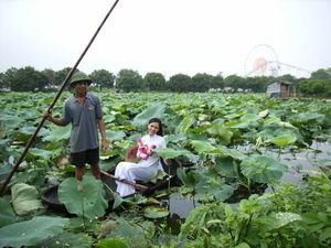 The lotus lake in Hanoi